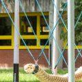 Ljuljačka Krokodil S.LJ.058.01 (3)